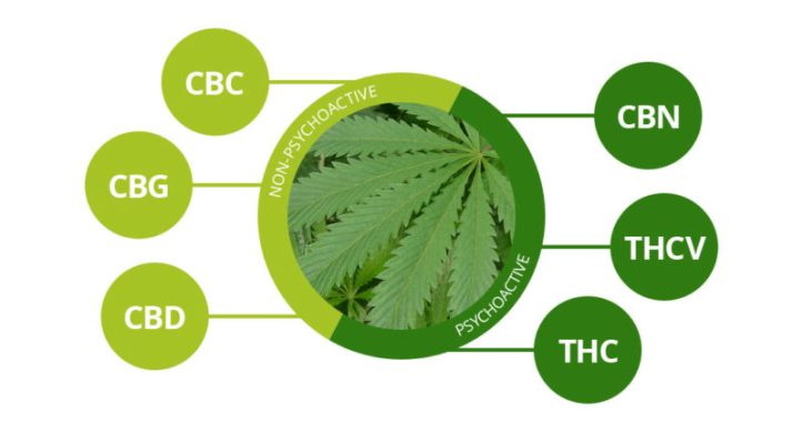cbn-marijuana-800x431